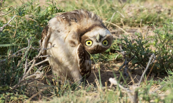 Name:  owl-706139.jpg Views: 238 Size:  66.8 KB